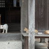 福津市内の神社めぐり-1