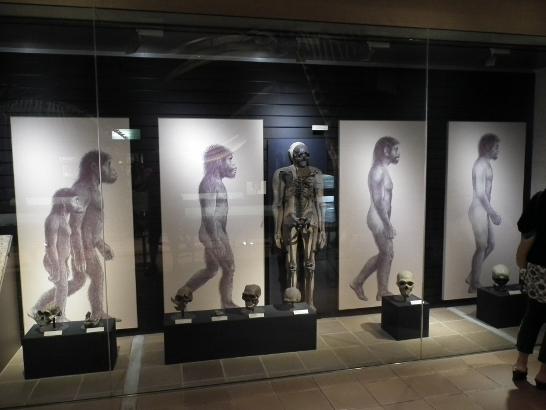 任類の進化