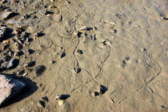 巻貝の軌跡