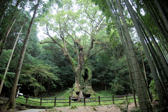 「九州一周神社巡り車中泊の旅」第二日目