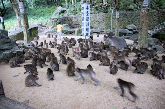 高崎山自然動物園のサル