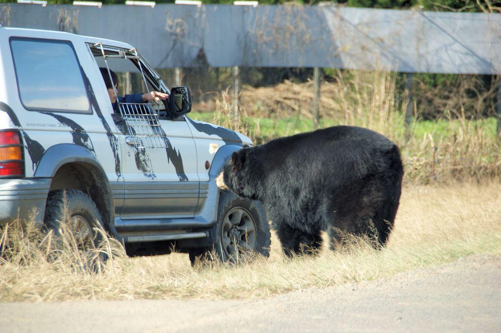 サファリランドのクマ