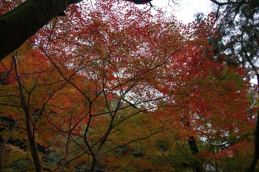 大寧寺の紅葉