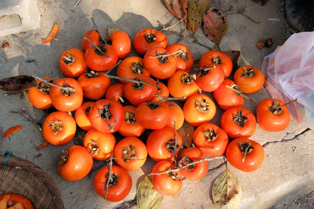 今日も柿取り~♪