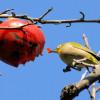 木炭作りと庭の小鳥たち