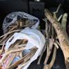 薪ストーブ用に流木拾い