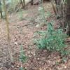 椎茸栽培地の確認