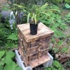 ニホンミツバチの巣箱設置しました!