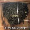 ニホンミツバチの巣箱の中を撮ってみた!