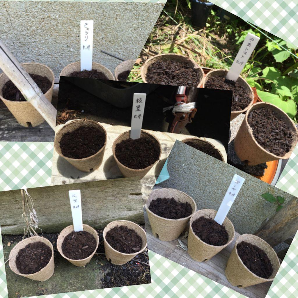 野菜の種植え