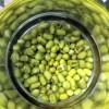「豆もやし」と「豆苗」の栽培1日後