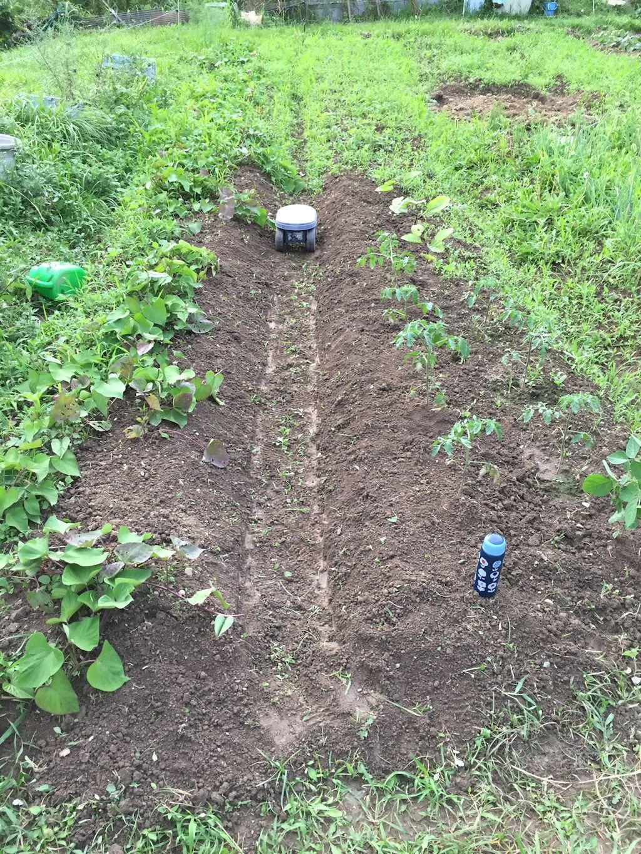 畑の草取りと今朝の虫