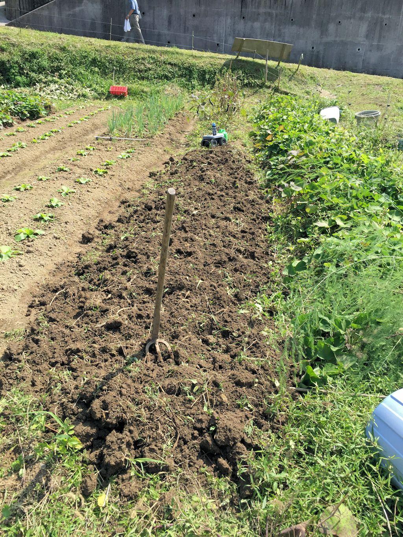 ニンニクと玉ねぎ植えます