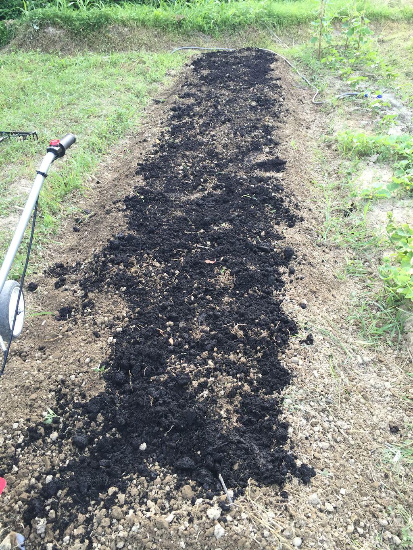 牛糞堆肥を撒く