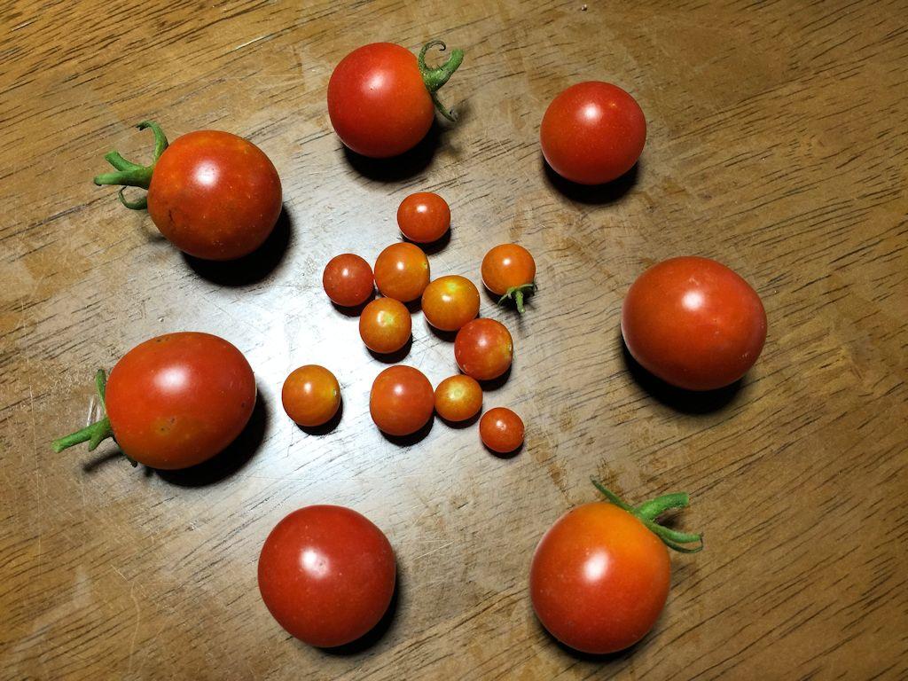 ミニトマトと豆トマト