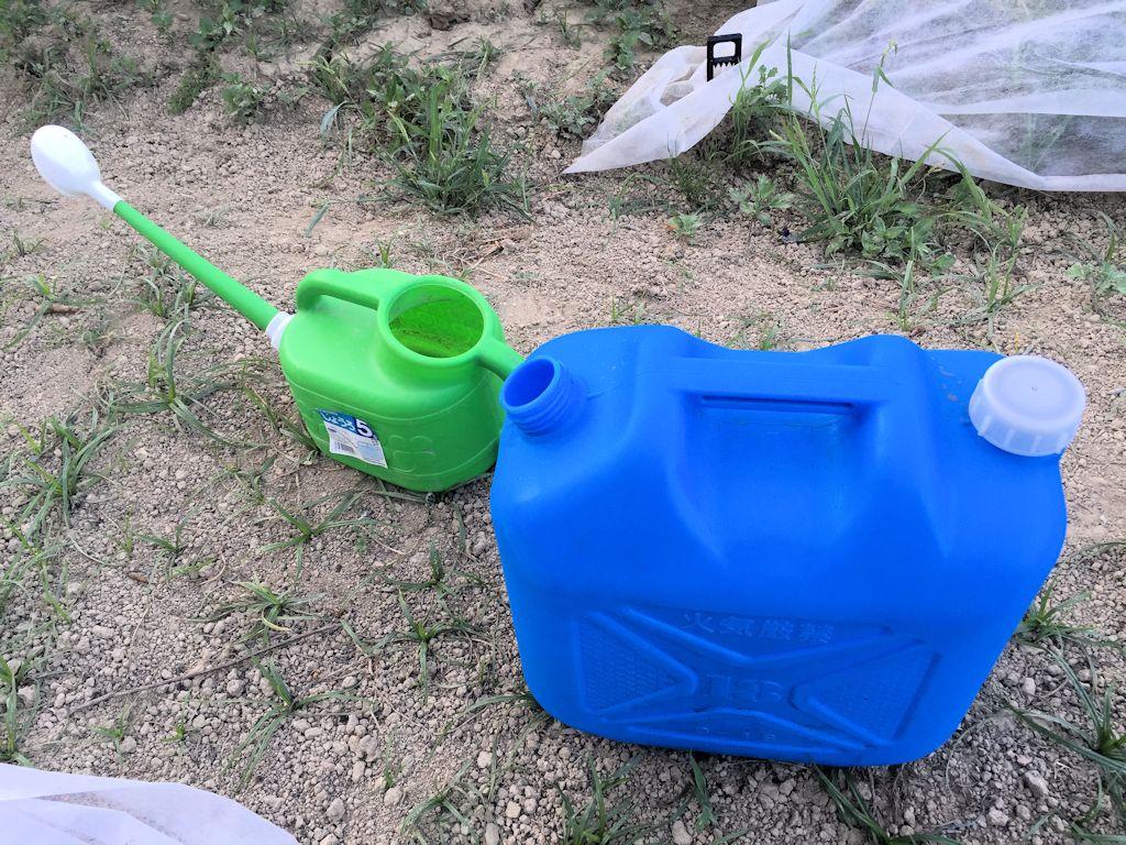 畑の水やり