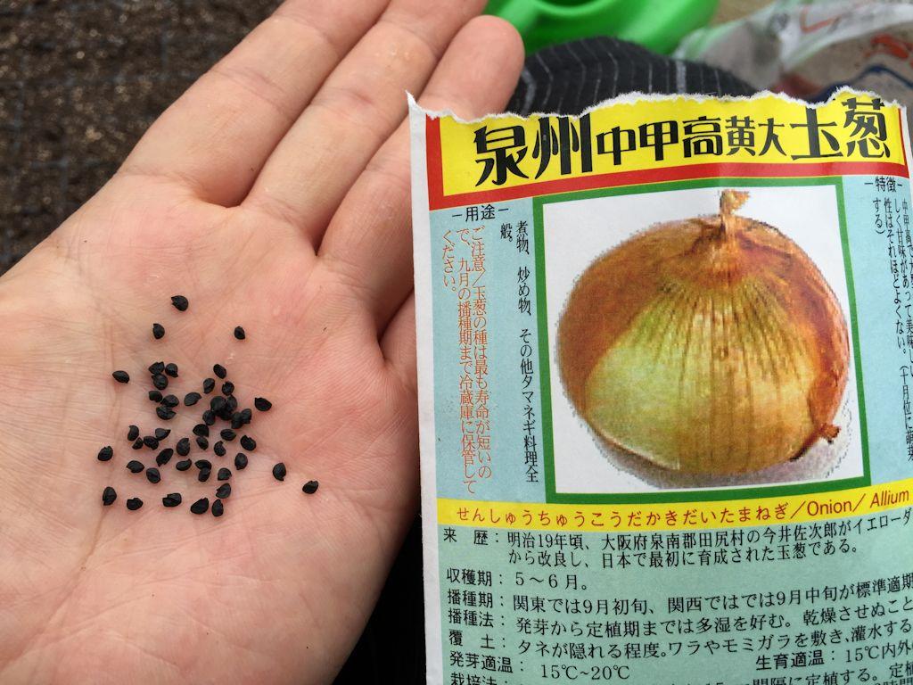 泉州中甲高黄大玉葱の種