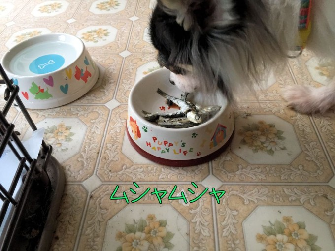 いりこ(煮干)